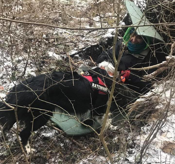 Ostatni trening terenowy psów w tym roku