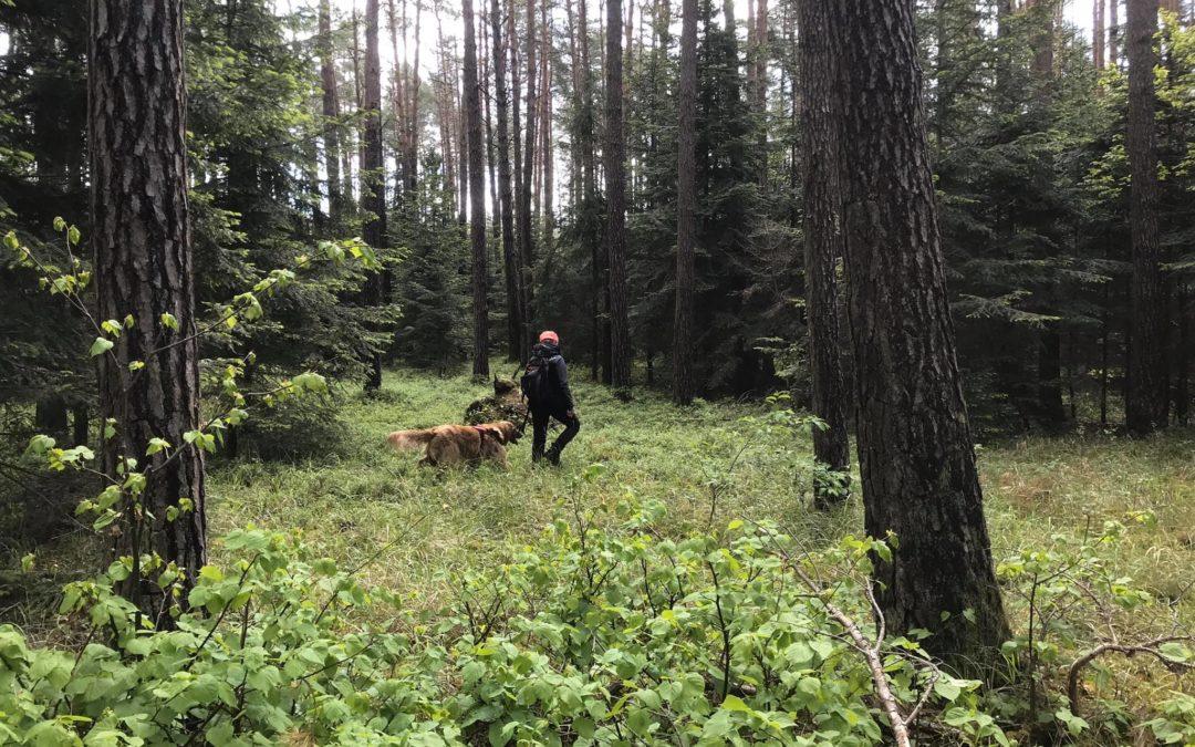 Szkolenie psów ratowniczych SAR K9
