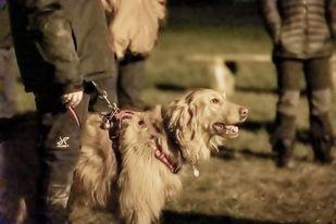 Weda i Frida na szkoleniu ratowniczym w Świdnicy.